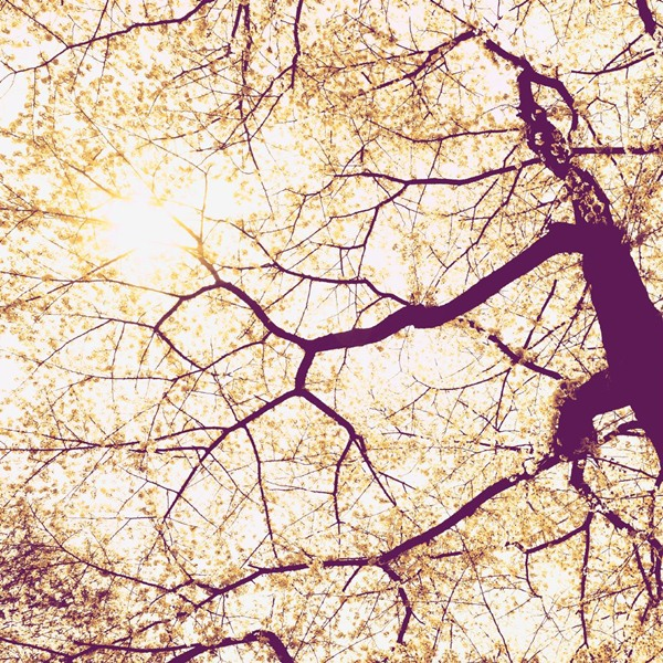 Fotomural Sunshine V5-752