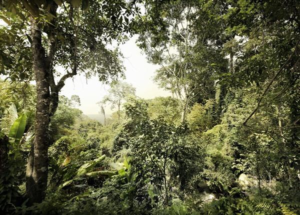 Fotomural Dschungel V7-751