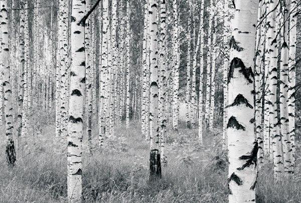 Fotomural Woods V8-724