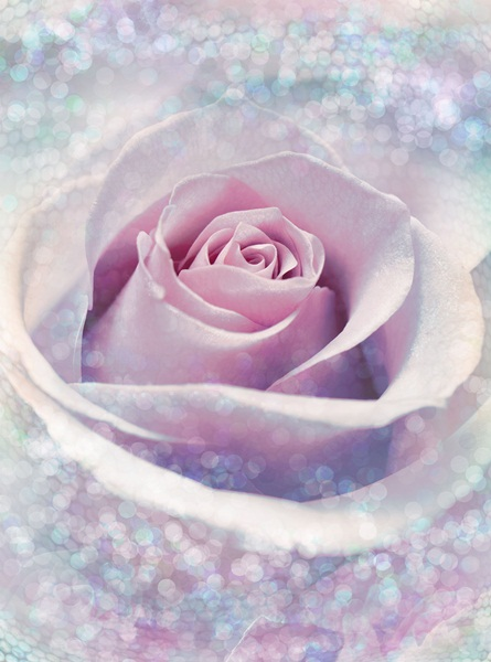 Fotomural Delicate Rose XXL2-020