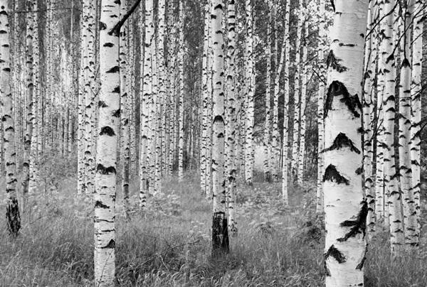Fotomural Woods XXL4-023