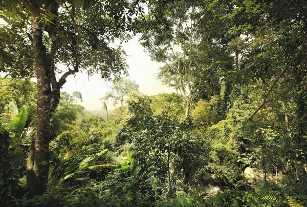 Fotomural Dschungel XXL4-024